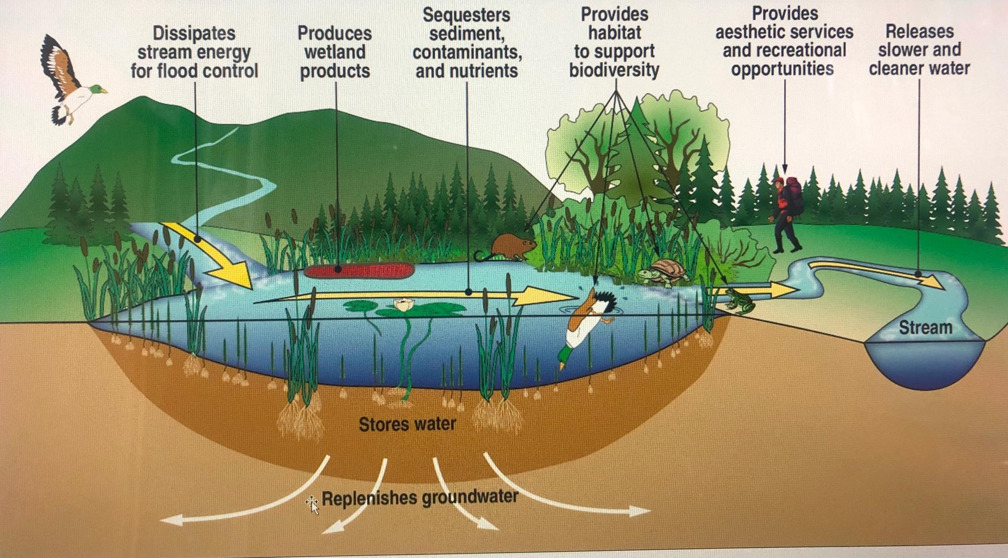 Water Purification as Defined by Nature